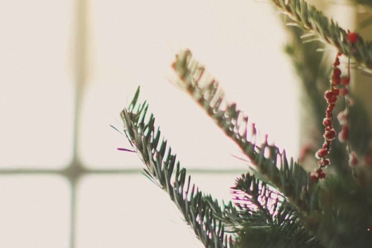 christmastime for the bruised and broken